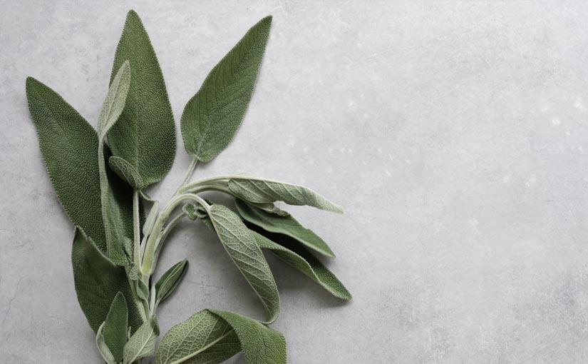 Die Flavonoide im Salbei