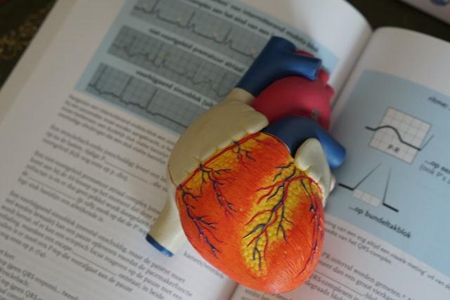 Read more about the article Flavonoide können vor Krebs und Herzkrankheiten schützen